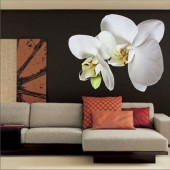 Wall sticker, Wall tattoo, Wall decoration, Wall decal - 02.Photo wall sticker
